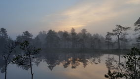 Myr sjö tidigt på morgonen Royaltyfria Bilder