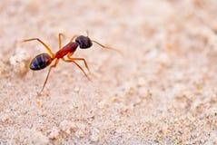 myra arkivfoto