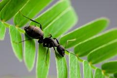 myra Arkivbild