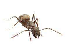 myra Arkivbilder
