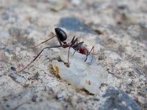 myra funnen mat på betong Arkivbilder