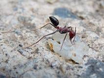myra funnen mat på betong Royaltyfri Bild