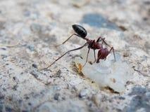 myra funnen mat på betong Royaltyfri Foto