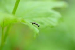Myra på leafen Arkivfoto
