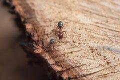 Myra på tree Arkivbild