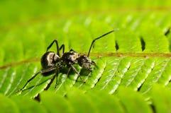 myra som söker något Royaltyfri Fotografi