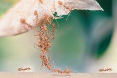 Myrabroenhet Arkivfoton