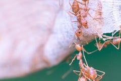Myrabroenhet Fotografering för Bildbyråer