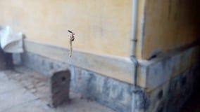 Myran äter larven royaltyfria foton