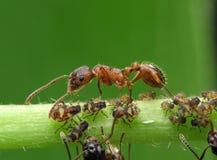 myrared Arkivfoton