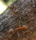 myrared tv? fotografering för bildbyråer