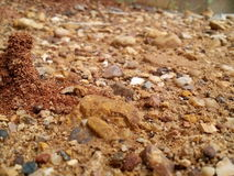 Myrarede arkivbild