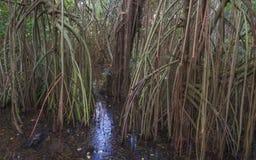 Myren i den urtids- skogen med rees och växter Royaltyfria Bilder