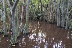 Myren i den urtids- skogen med träd och växter Royaltyfri Foto