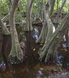 Myren i den urtids- skogen med träd och växter Arkivbilder