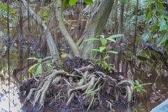 Myren i den urtids- skogen med träd och växter Fotografering för Bildbyråer