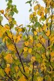 Myrlandskap med träd i träsk Royaltyfri Bild