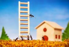 Myror bygger ett hus med stegen royaltyfria foton