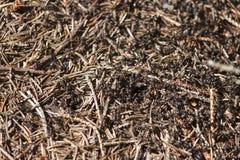 Myror i en myrstack Fotografering för Bildbyråer