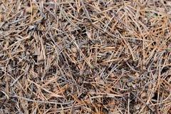 Myror i en myrstackskog Arkivbild