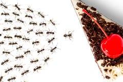 Myror och kaka Royaltyfria Foton