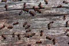 Myror och match Arkivfoto
