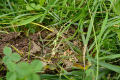 Myror och myraägg Arkivbild