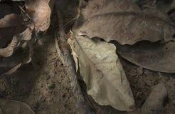 Myror och stupade sidor Fotografering för Bildbyråer