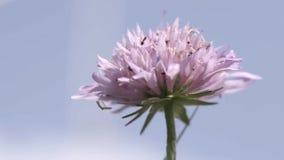 Myror på blomma arkivfilmer
