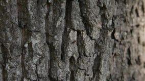 Myror på skället lager videofilmer