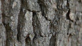 Myror på skället arkivfilmer