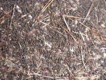 Myror på våren Arkivbild