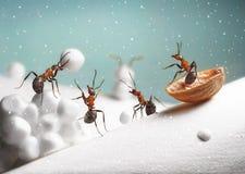 Myror rider pulkan, och lek kastar snöboll på jul Arkivfoto