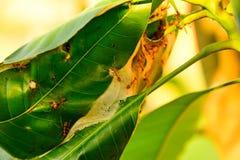 Myror samlas på ingången av redet Royaltyfria Foton