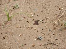 Myror som fortlever i en rainforest Arkivfoto