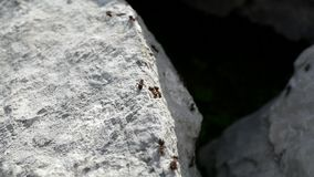 Myror som kör på en kalksten, vaggar lager videofilmer