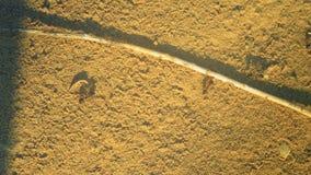 Myror som kör på sandteamworken arkivfilmer
