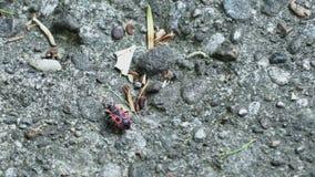 Myror som tätt kör upp makro lager videofilmer