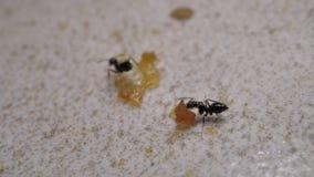 Myror som t?tt flyttar sig upp stock video