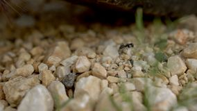 Myrorna går över stenarna Myrvägen Närbild lager videofilmer