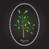 Myrrh Stock Photos