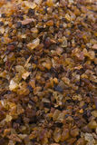 Myrrh (Commiphora myrrha) Royalty Free Stock Photo