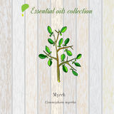 Myrrh, essential oil label, aromatic plant Stock Image