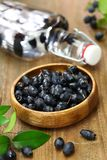 Myrte-Früchte lizenzfreie stockfotografie