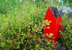Myrtille Images libres de droits