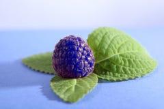 Myrtille et feuille verte Image stock