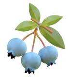Myrtille sur des branches d'un buisson Photo stock