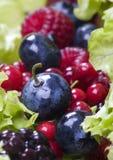 Myrtilles avec des fruits Images libres de droits
