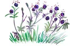 Myrtilles d'illustration Illustration Stock