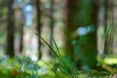 Myrtilles de branche avec le fond cristal-frais brouillé Photos stock